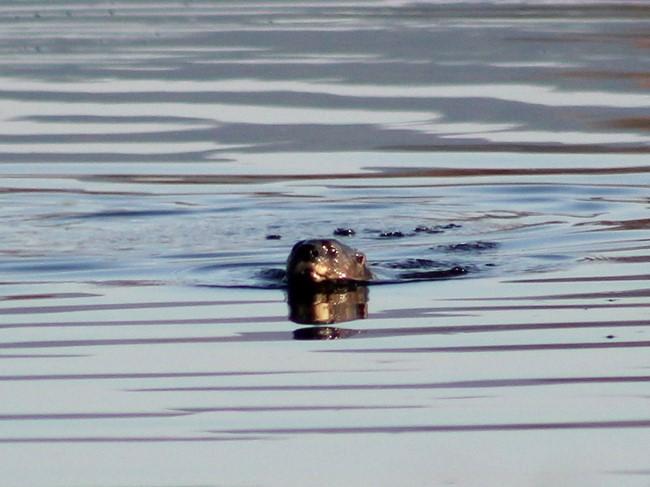 Wildlife - Otter 2